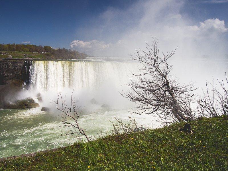 Horseshoe Falls Niagara Falls Canada Tree Ontario