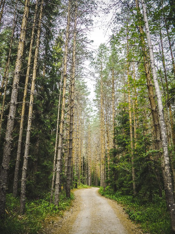 Finlandia Finland Forest Aga Out Of Office